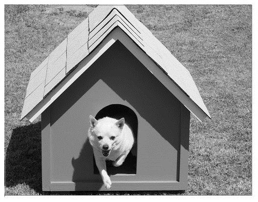 DIY dog house build.